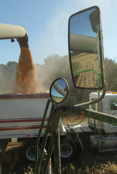 Farmer during harvest of corn, including a Monsanto brand