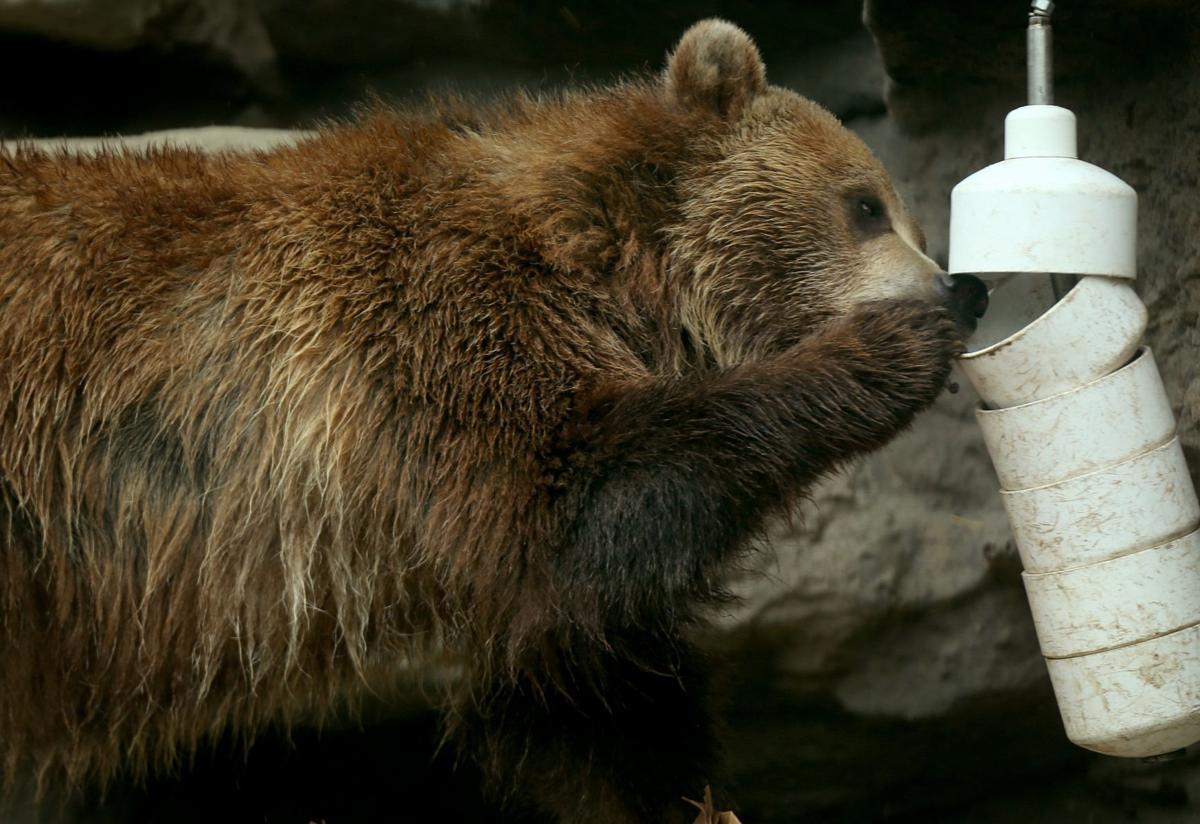 Most work continues at St. Louis Zoo despite coronavirus