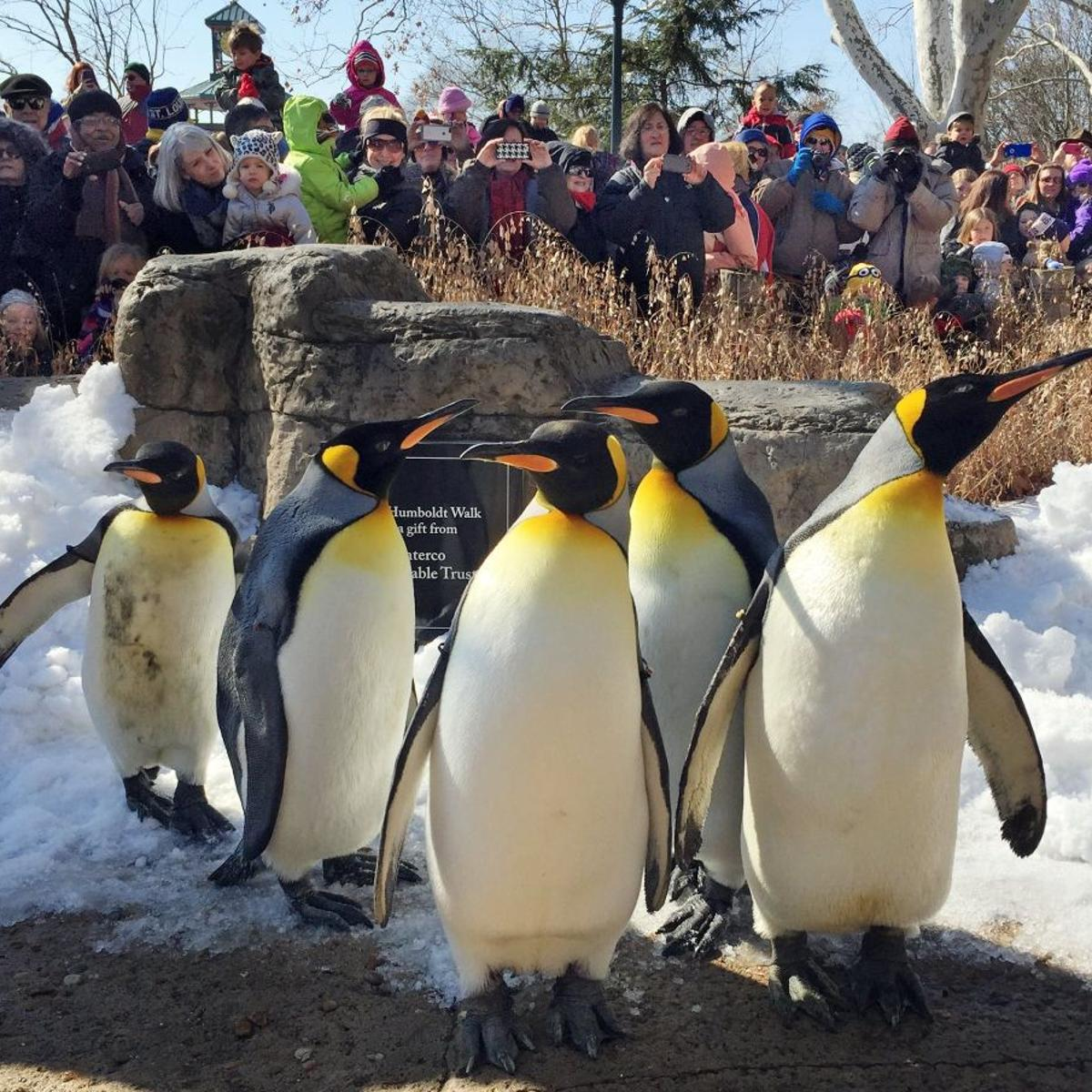 St  Louis Zoo nominated as 'best free attraction' in U S
