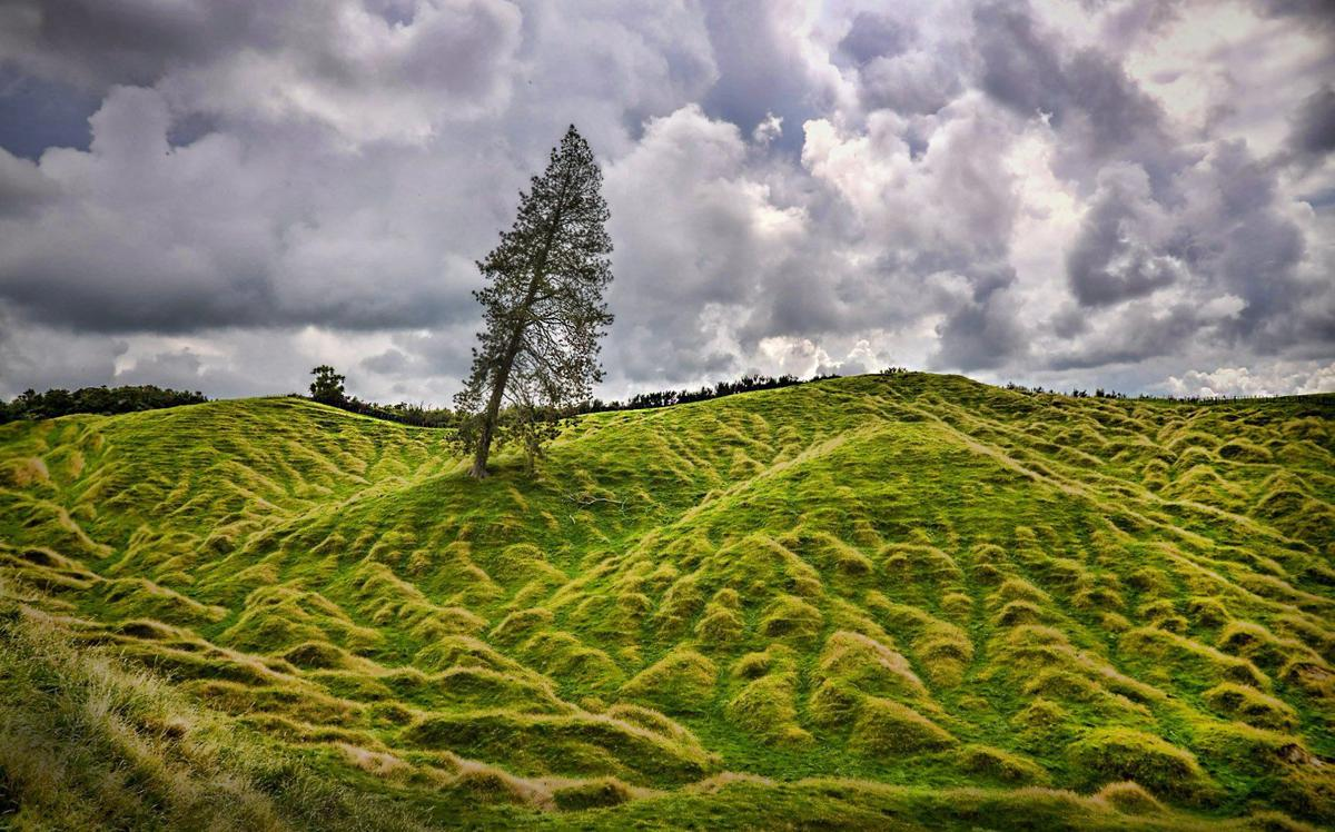 New Zealand Farmland
