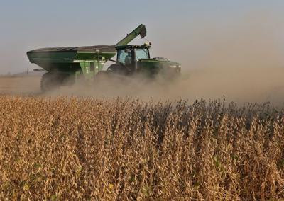 Farm worker in a soybean field