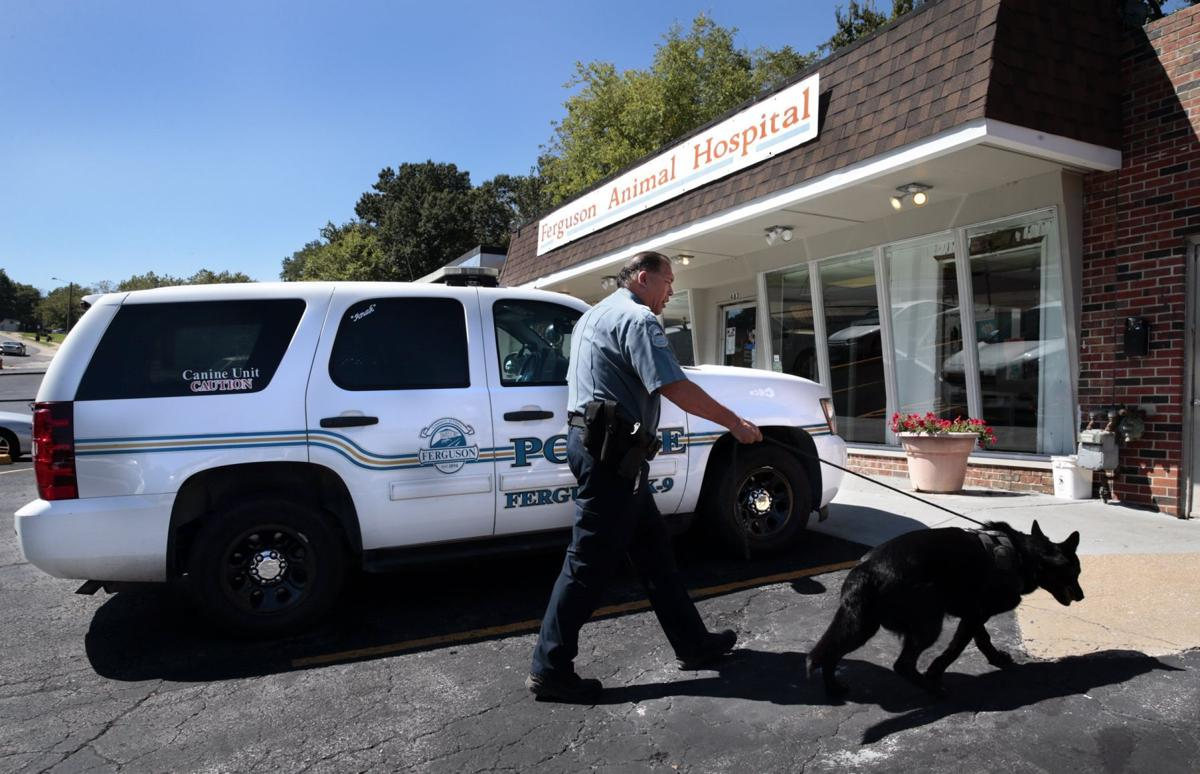 When a police dog needed titanium tooth crowns, Ferguson