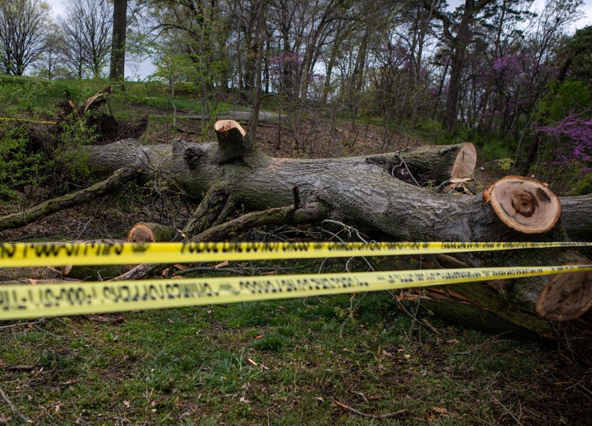 Pedestrian injured after tree falls in Forest Park