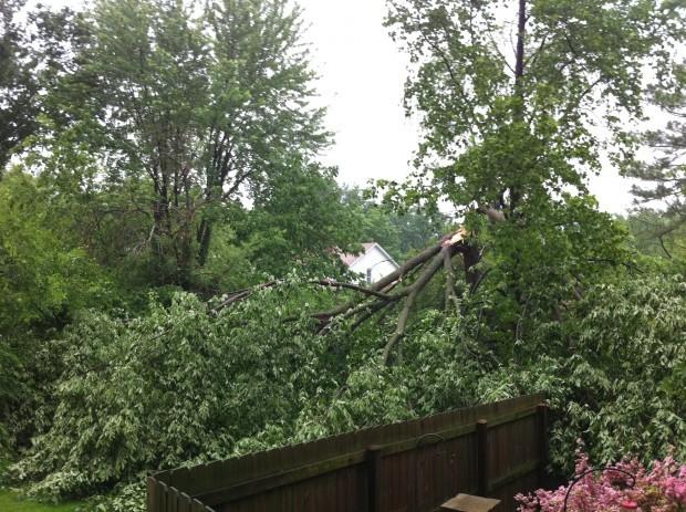 tree damage webster