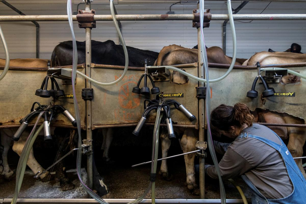 The Wider Image: NAFTA deal gives little help to U.S. dairy farmers