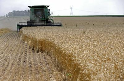 File photo of a combine driving over stalks of soft red winter wheat during the harvest on a farm in Dixon, Illinois