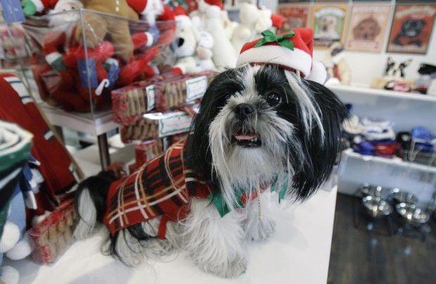 Keep pets safe this holiday season