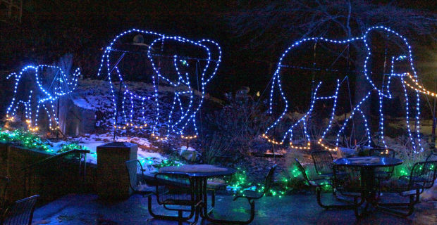 Wild Lights At The Saint Louis Zoo