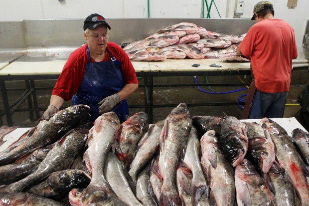 Big River Fish company cashes in on carp