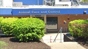 ボランティアの禁止公的レセントルイス郡動物の避難所に訴訟という
