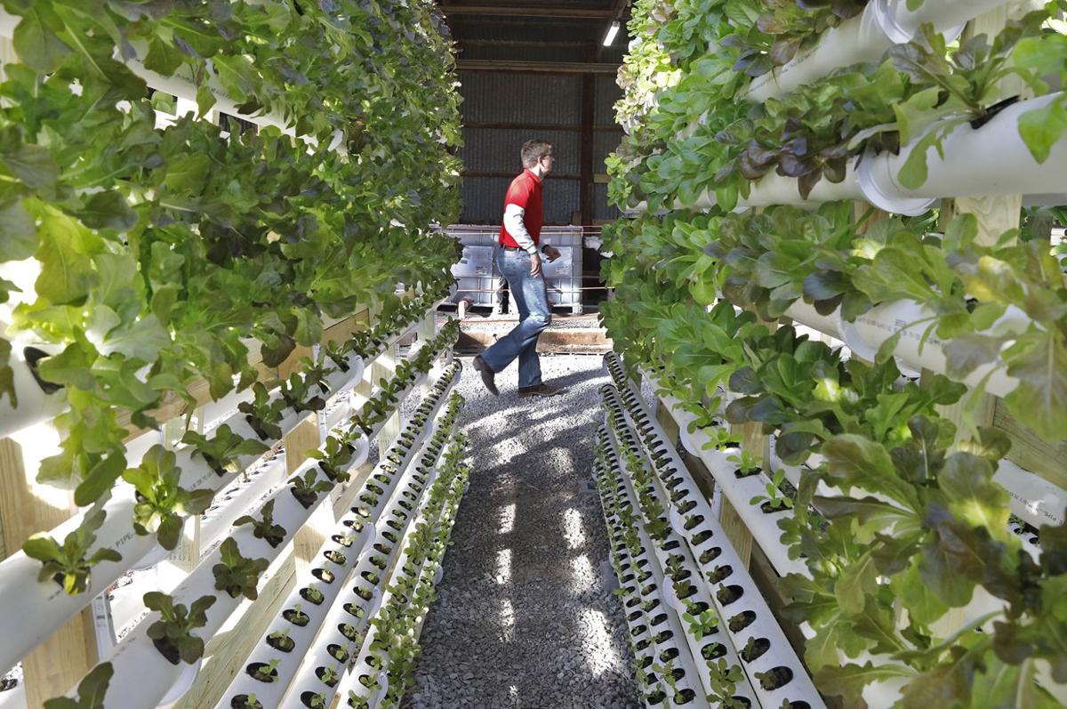 The Mueth brothers try vertical aquaponics vertical technology