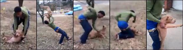 Dog attack image