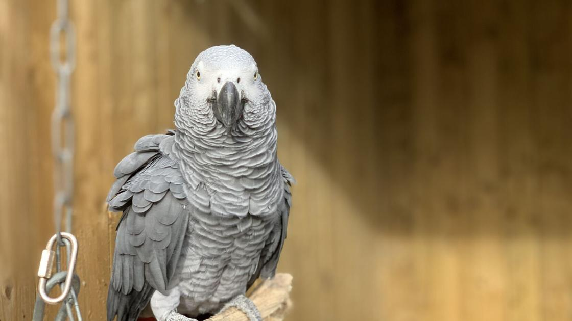 Parrots in wildlife park moved after swearing at visitors in England