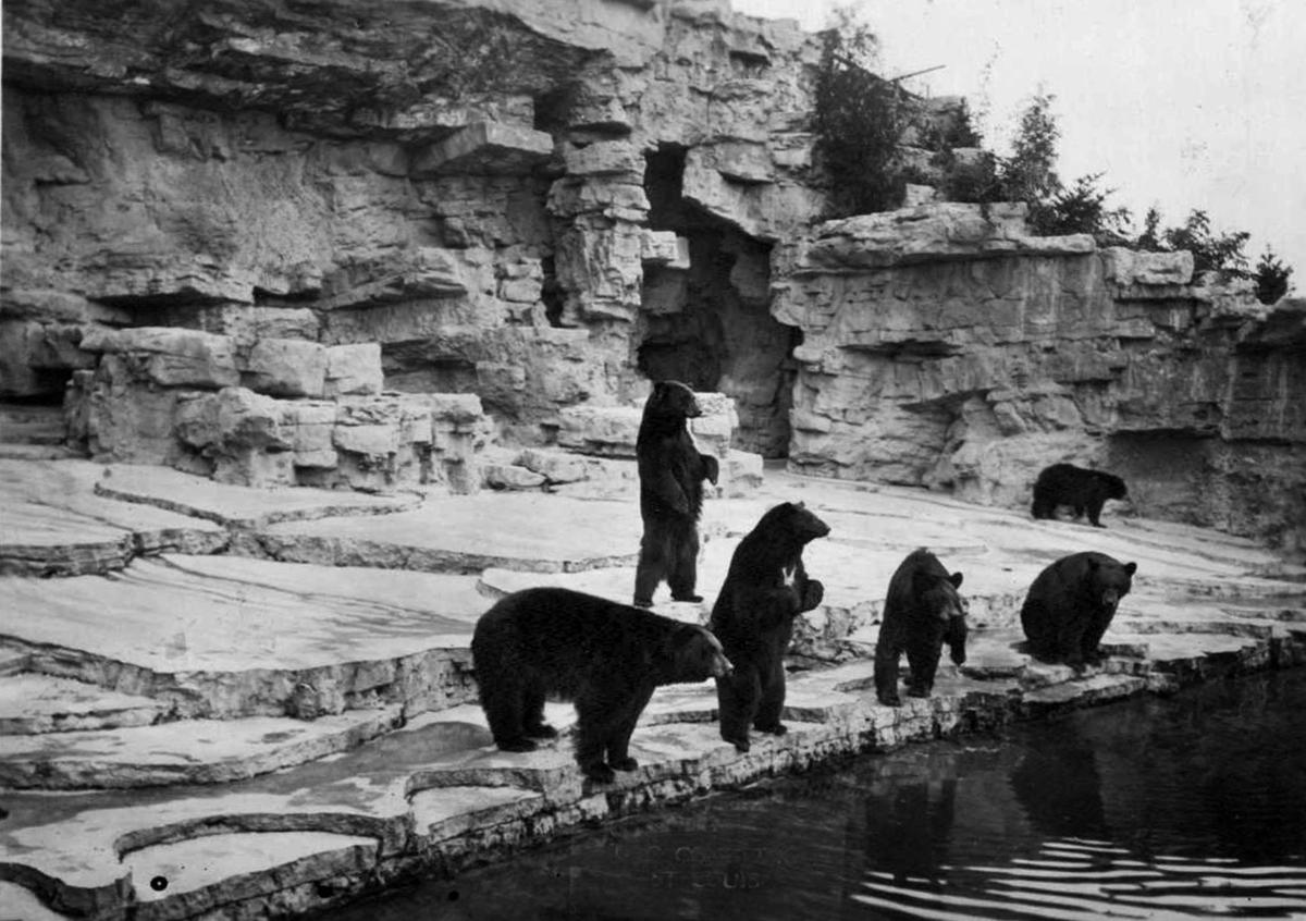 June 13, 1931: The Zoo gives its bears an innovative new home.