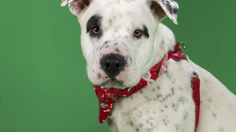 Meet our pets of the week: A pointer mix, a bunny and a horse