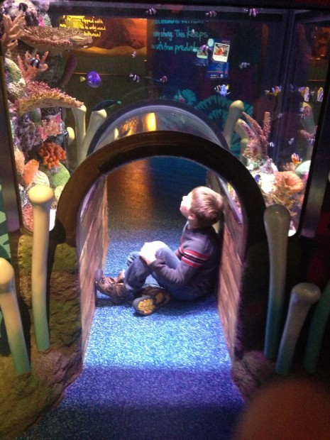 sea life aquarium in kc offers up close visits travels with amy. Black Bedroom Furniture Sets. Home Design Ideas