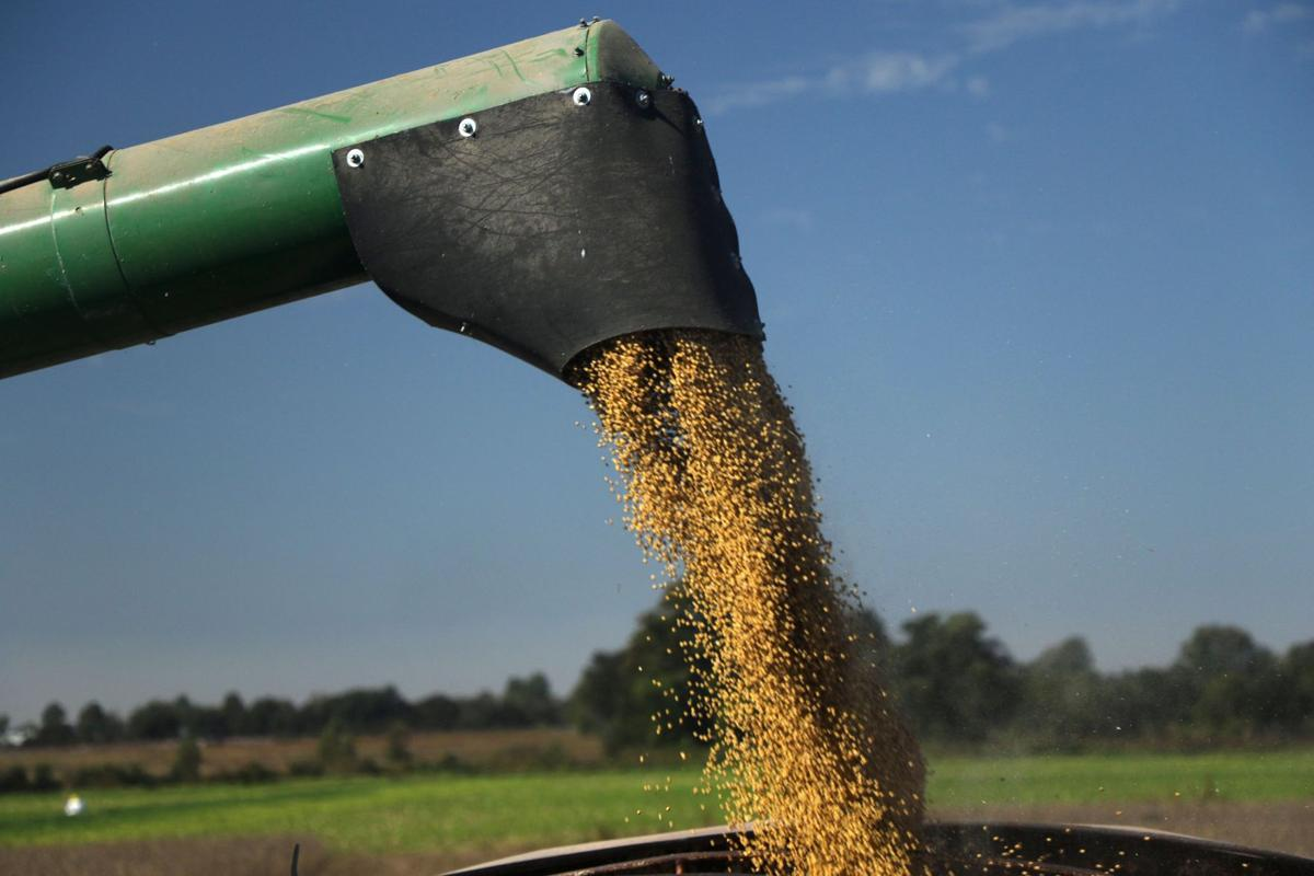 Illegal use of herbicide may have diminished soybean yields in the Bootheel