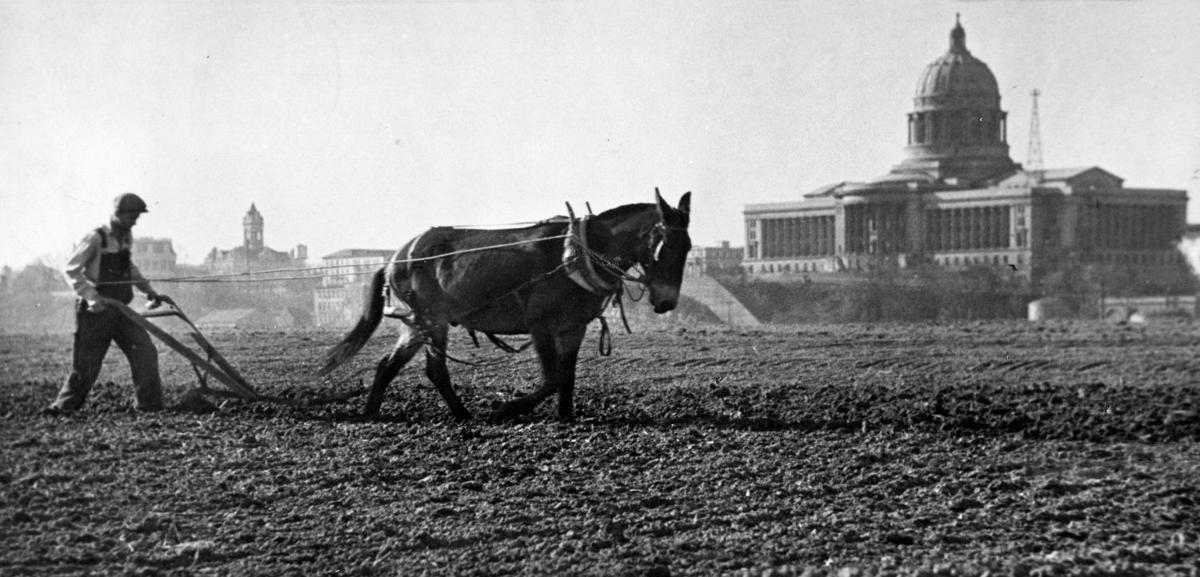 The History of the Missouri mule