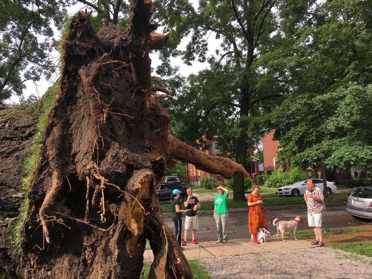 Storm causes extensive damage across St.  Louis overnight