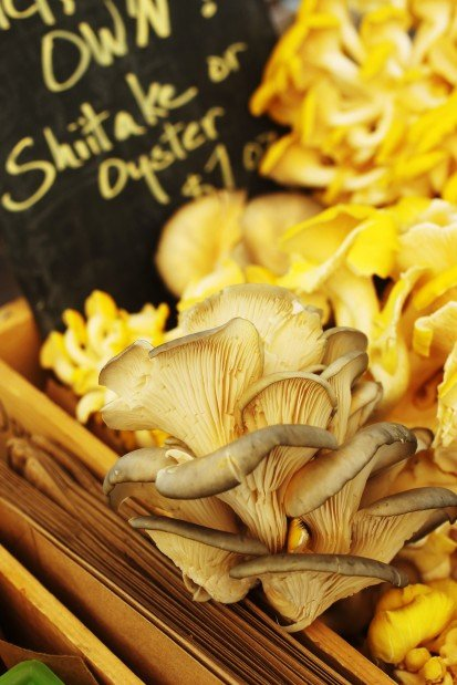 Ozark Forest Mushrooms at the Schlafly Farmers Market
