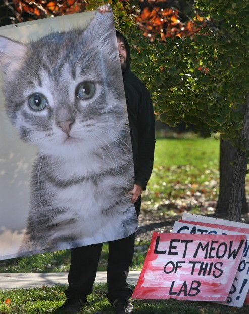 Animal rights groups protest using cats for medical education at Washington University