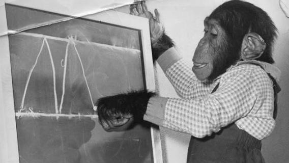 The night Mr. Moke, the talking chimp, was kidnapped from his cage at the St. Louis Zoo