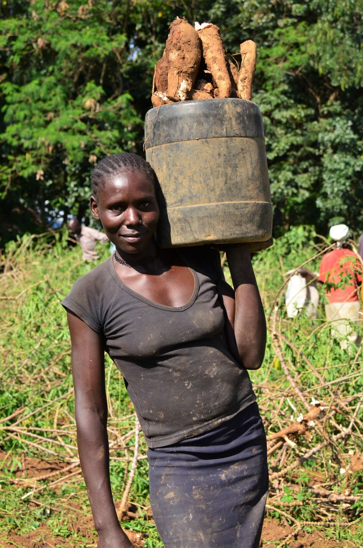 Kenyan farmer harvests cassava roots