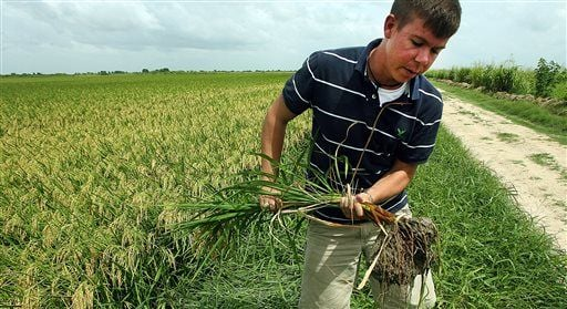 US-Cuba thaw could benefit farmers, energy and travel firms