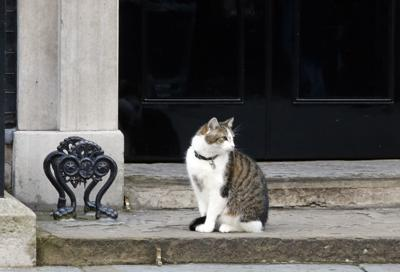 Larry the cat, the Chief Mouser to the Cabinet Office