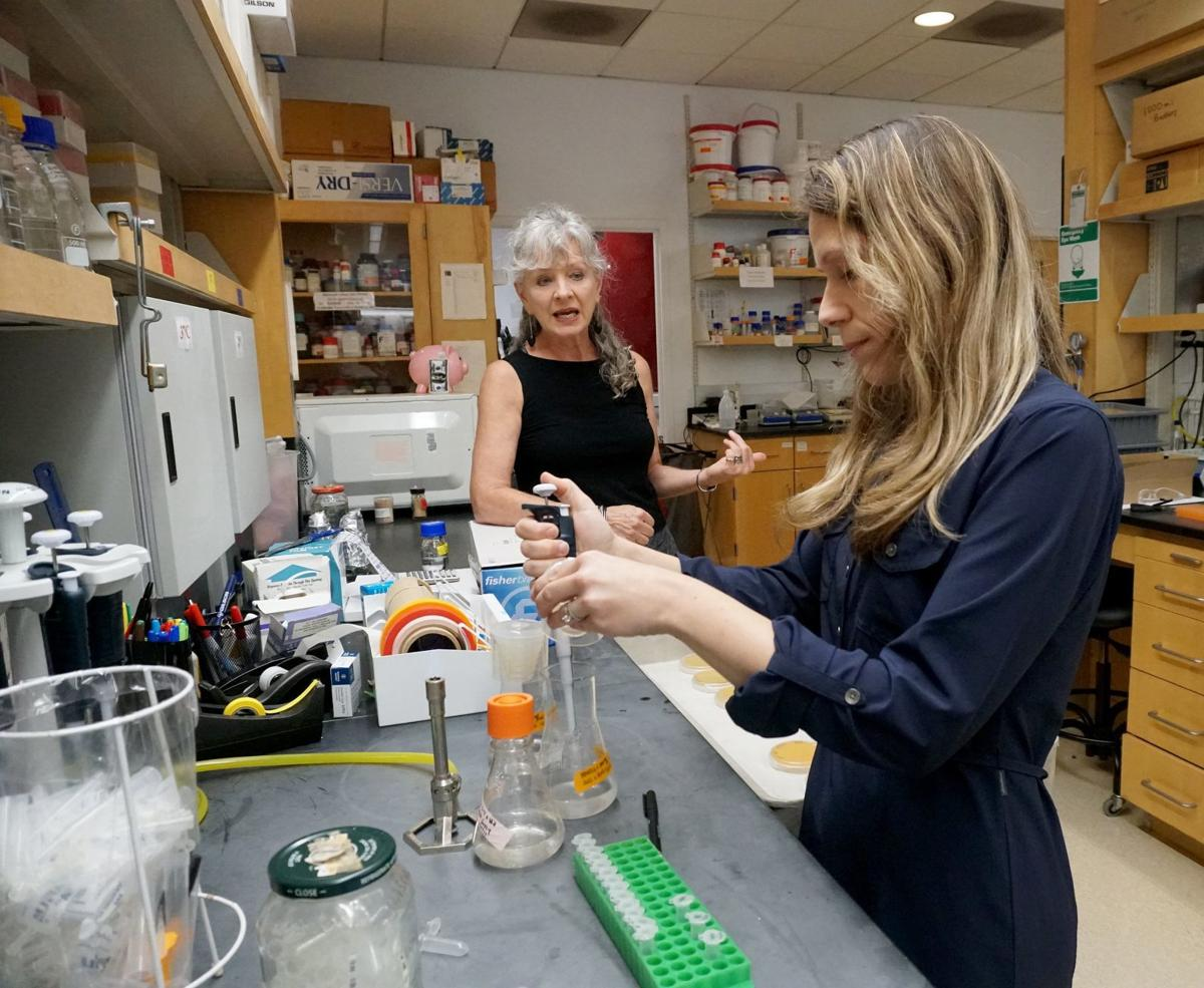 Scientists research at Donald Danforth Plant Science Center