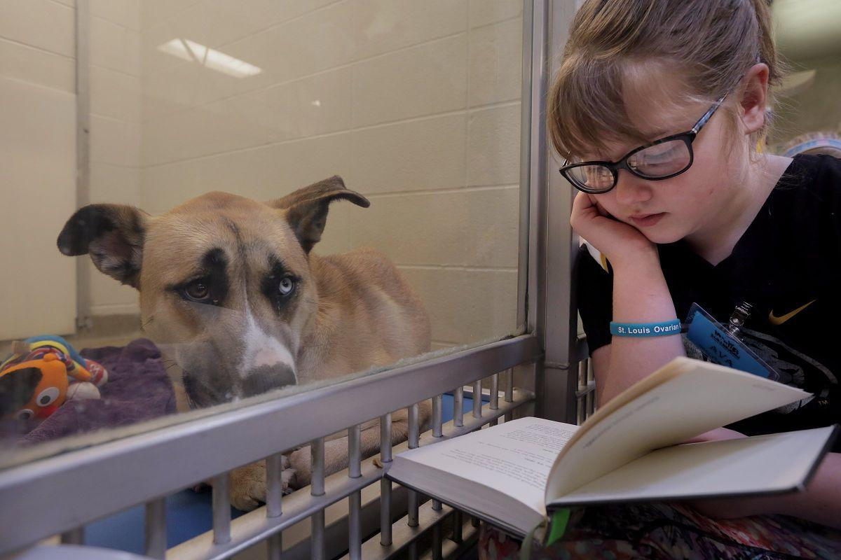 Reading to shelter dogs at the Humane Society of Missouri
