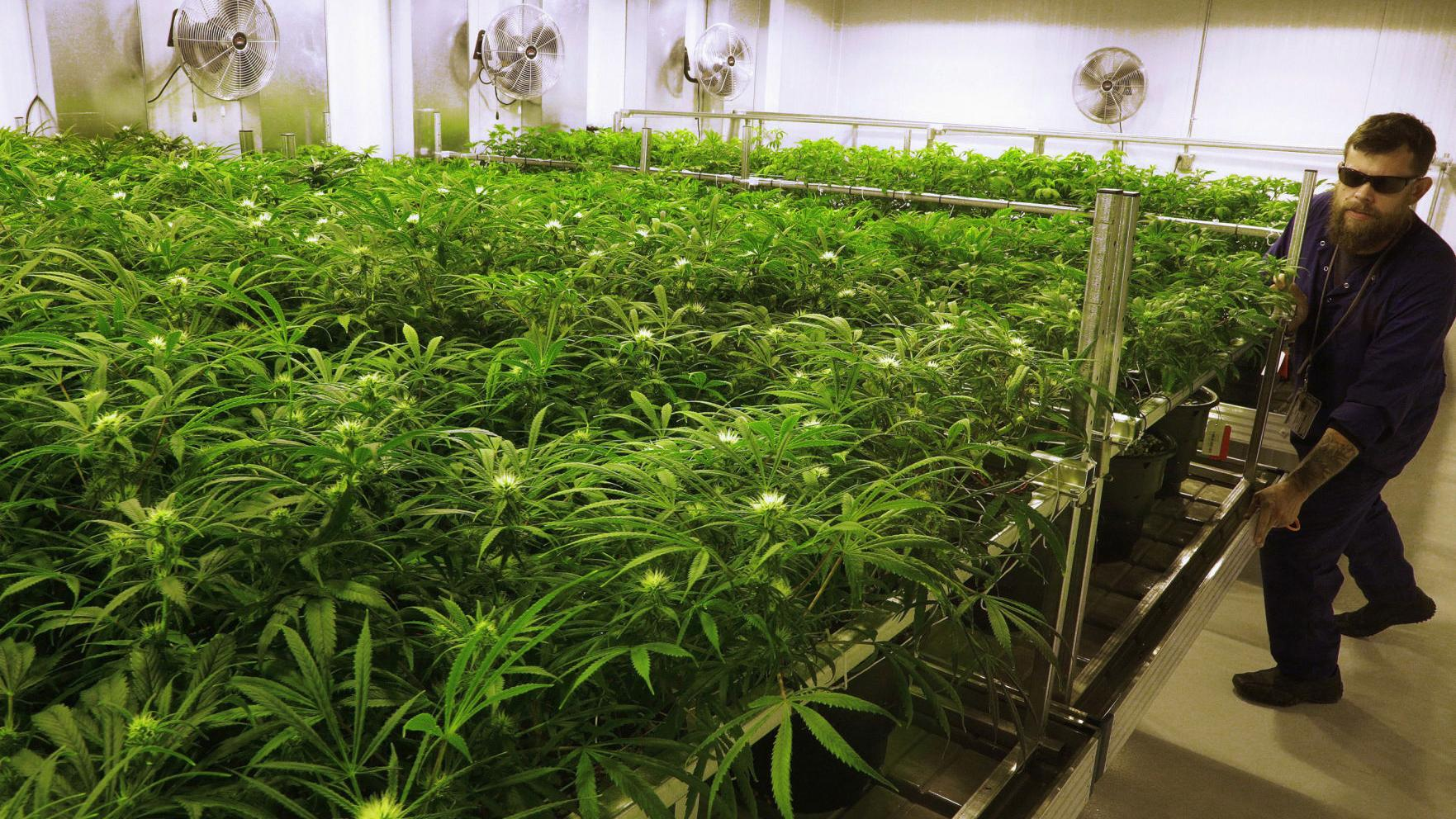Editorial: Legalized pot is becoming the norm in America. Missouri should get on board.