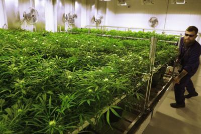 Marijuana in Illinois