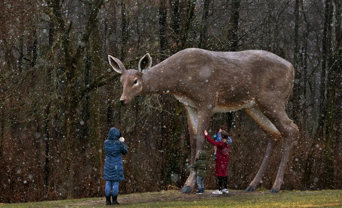 """Winter road trip stops to pet the """"Deer"""""""