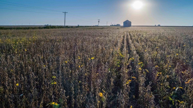 Central Illinois harvest photo