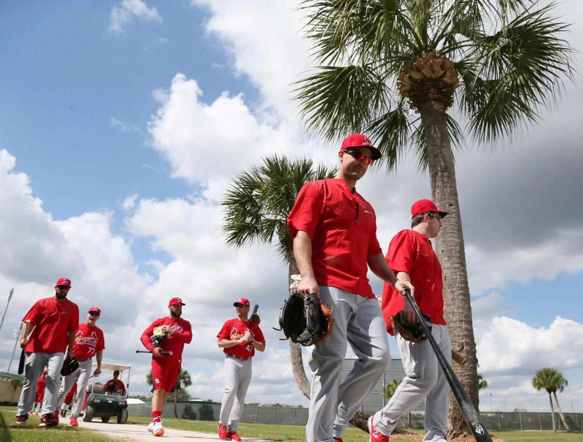 Cardinals spring training