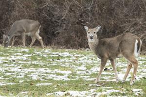 Kajak fahren? Glamping? Die Zucht? St. Louis Zoo sucht input für das 425 Hektar große campus Nord
