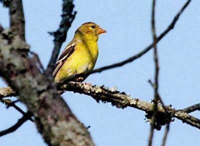 Song birds follow flowers