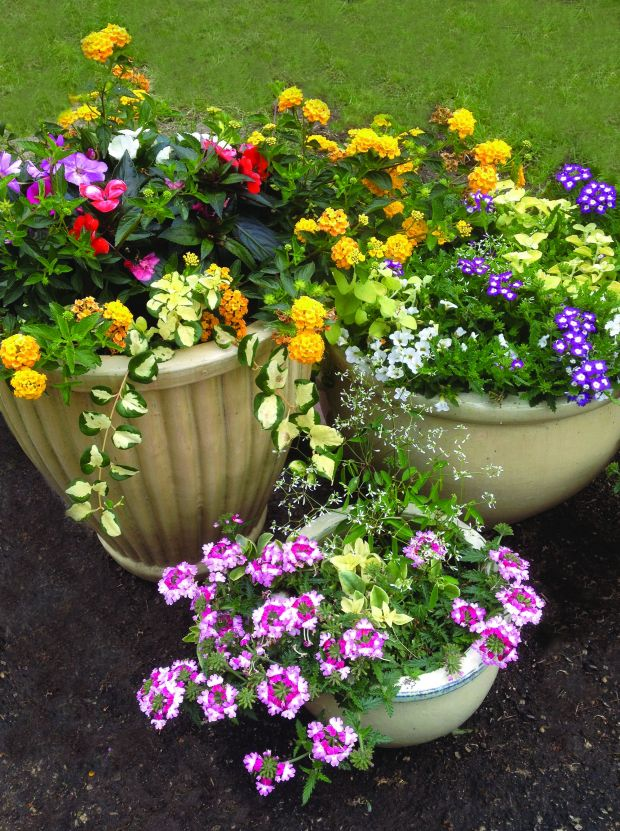 Plants That Pop For Great Curb Appeal Lifestyles