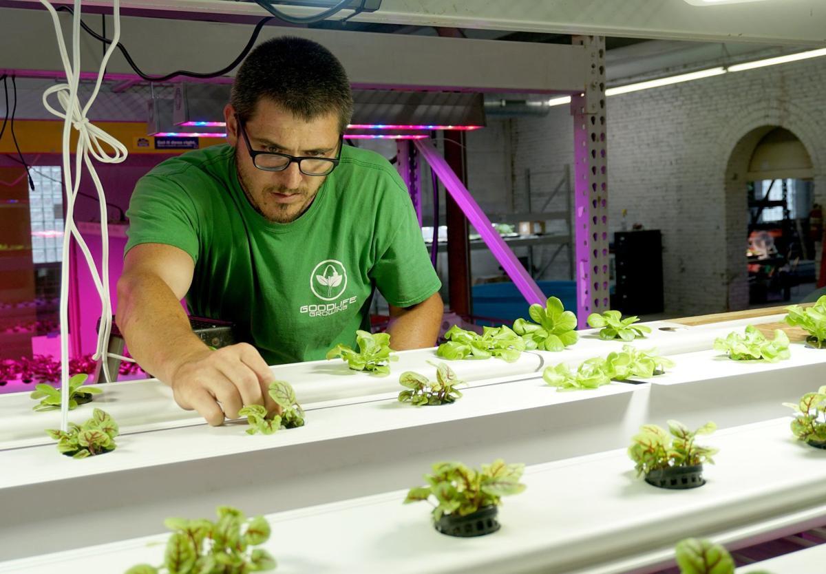 The Greencubator
