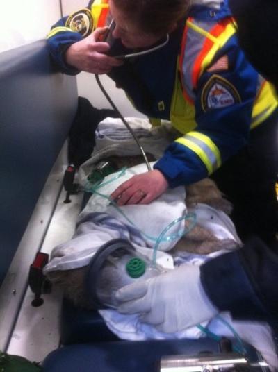 Paramedic treats injured dog