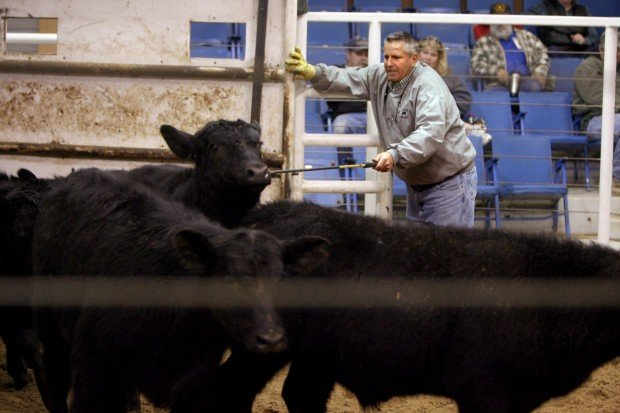 Beef prices expected to rise this year