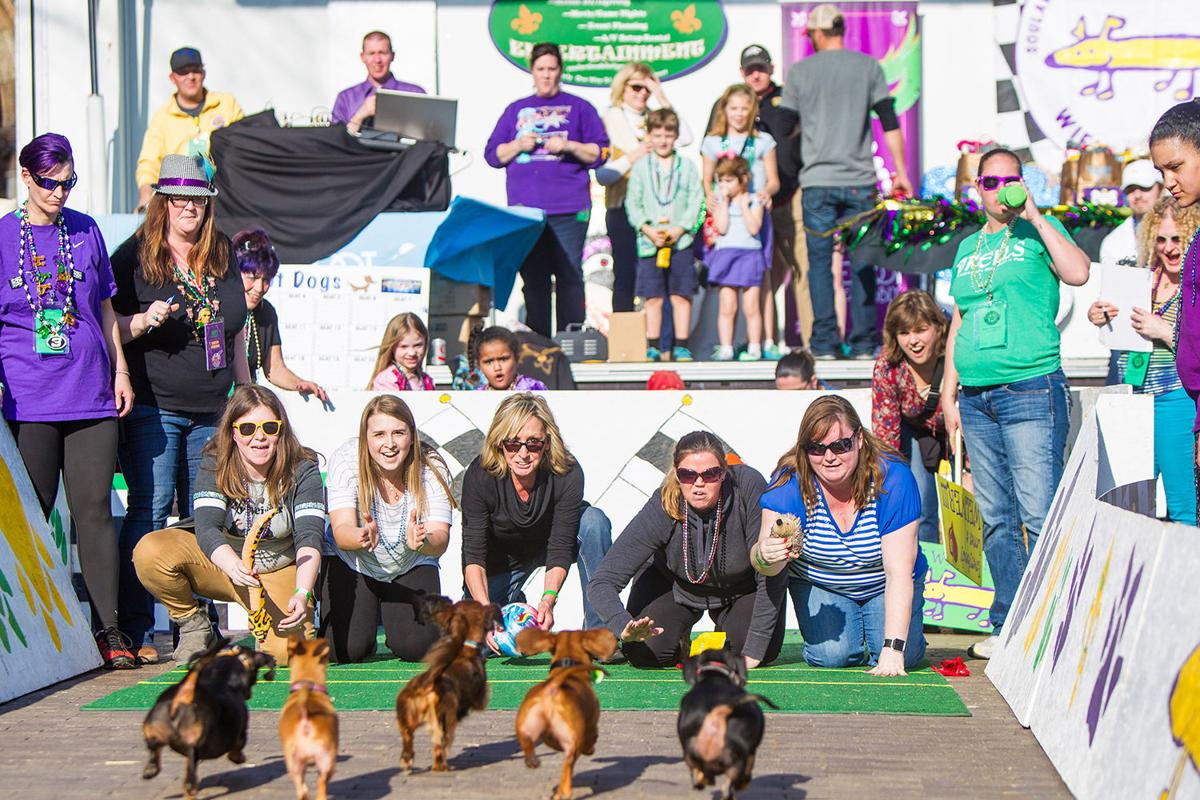 And they're off! St. Louis wiener dogs face off in 'slowest 2 minutes in racing'