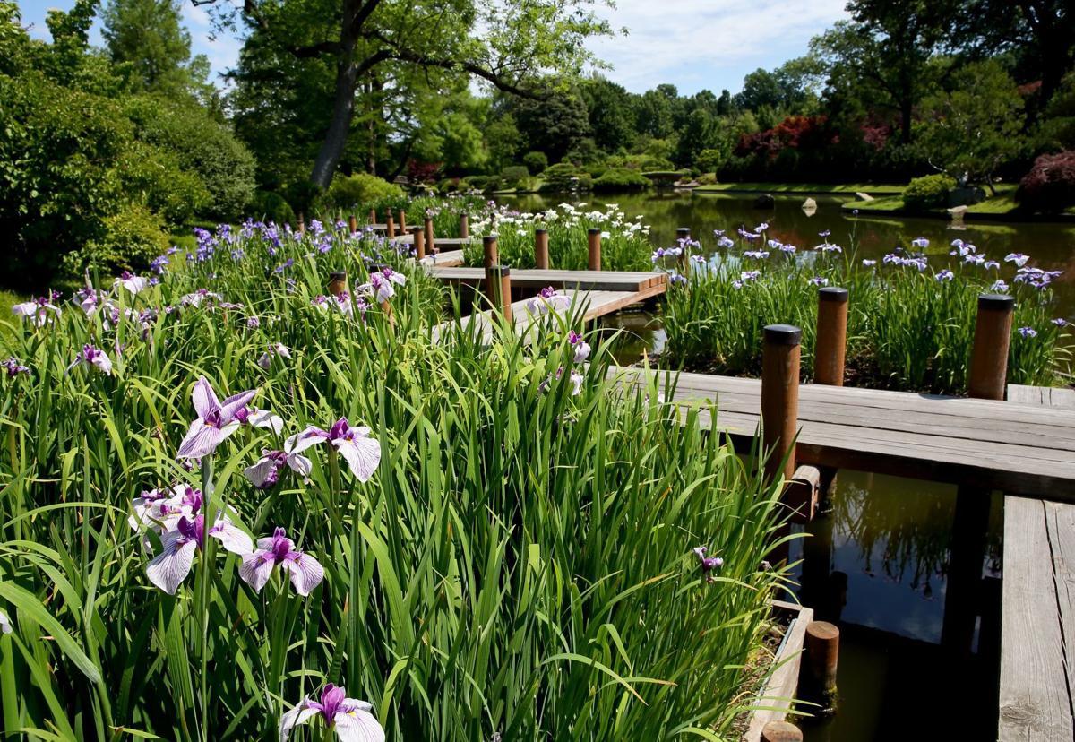 Staycation — Missouri Botanical Garden