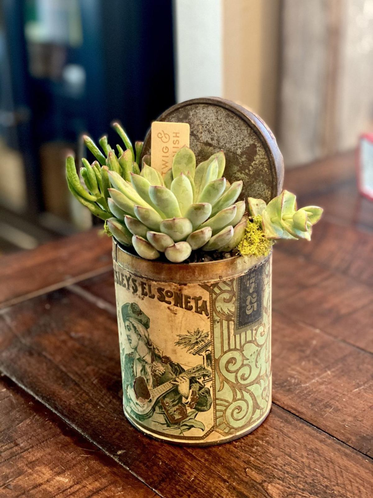 Made In St Louis Kirkwood Woman S Specialty Is Succulents In