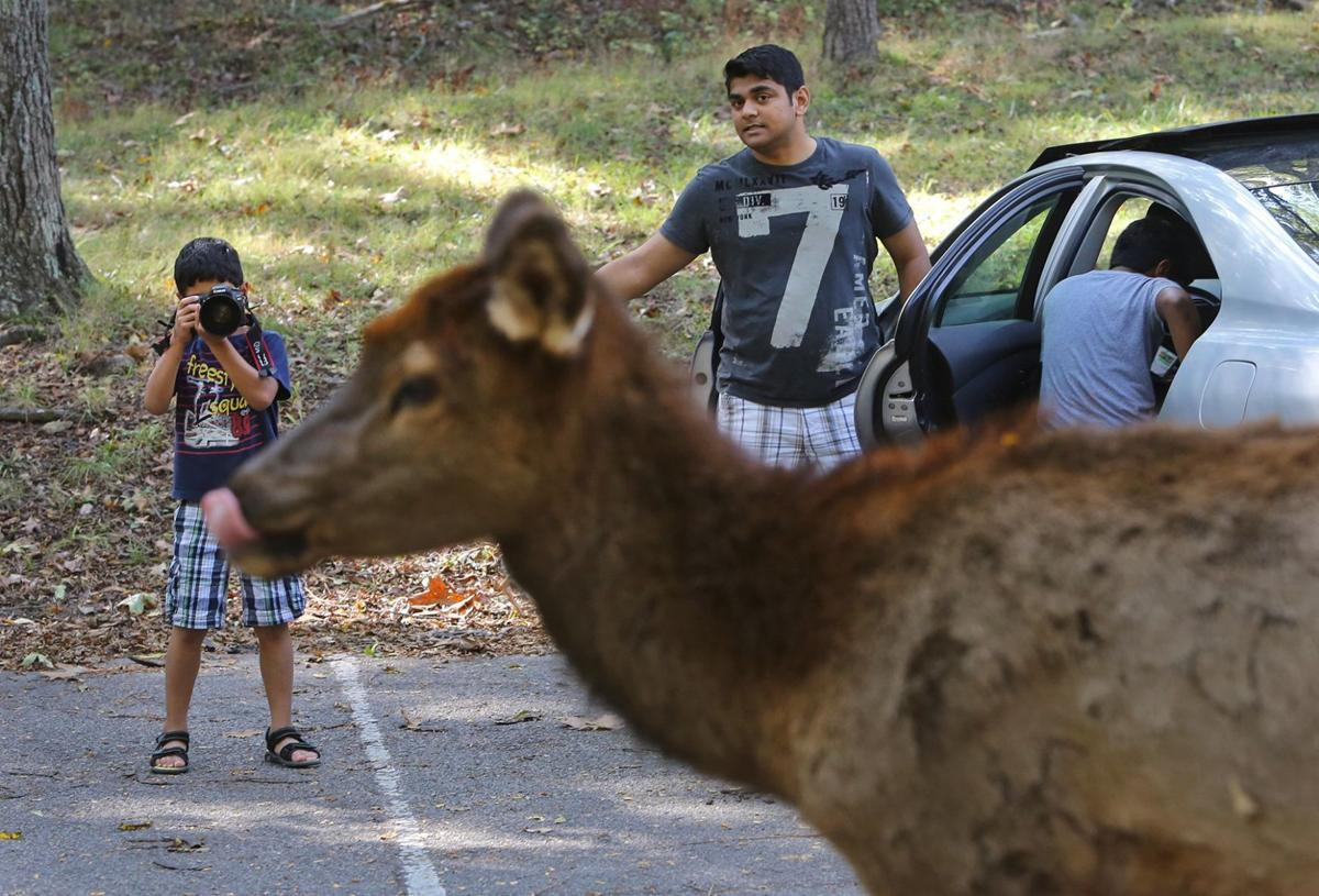 People are Ignoring the Signs at Lone Elk Park