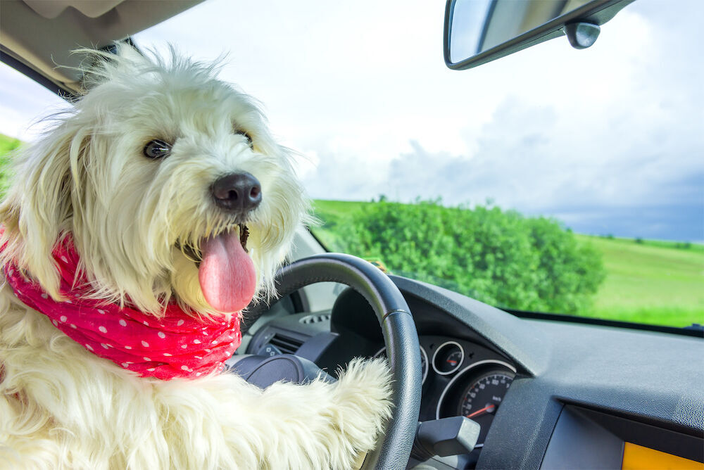 Dog is My Co-Pilot:  Tips for Taking a Road Trip Alone with Your Furkid (image)