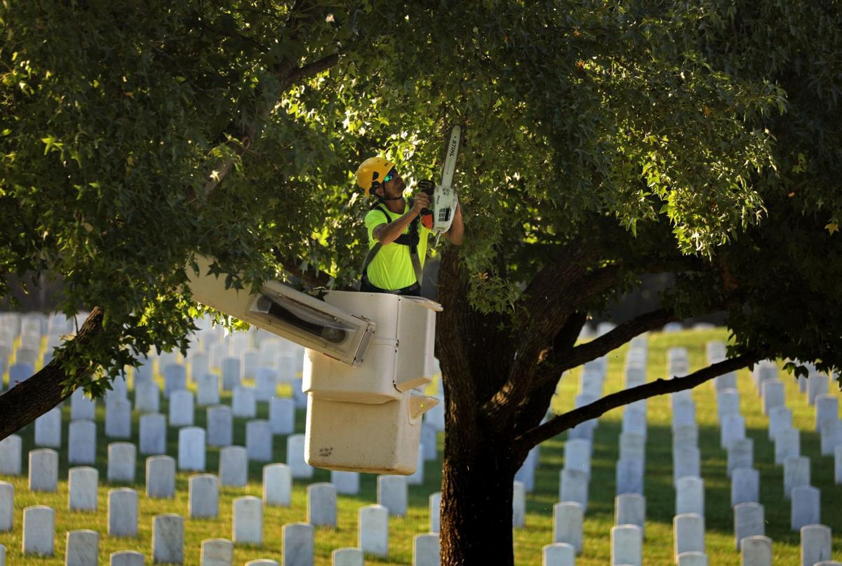 Photos: Arborists converge upon Jefferson Barracks to beautify trees