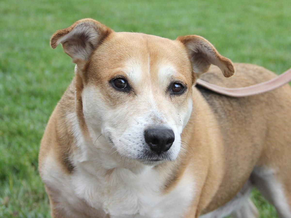 Pets of the week: Beagle mix, Lab mix, coonhound mix | Pets