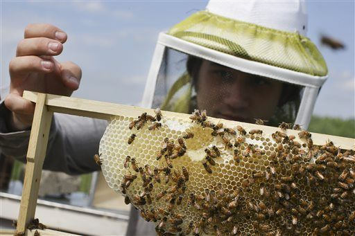 Epa Proposes Temporary Pesticide Free Zones For Honeybees